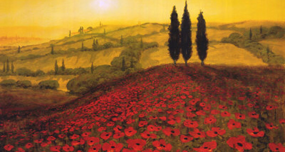 Poppy field di Steve Thoms